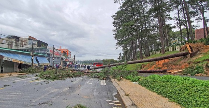 Downpour causes uprooted trees, mountain pass landslide in Da Lat City ảnh 1