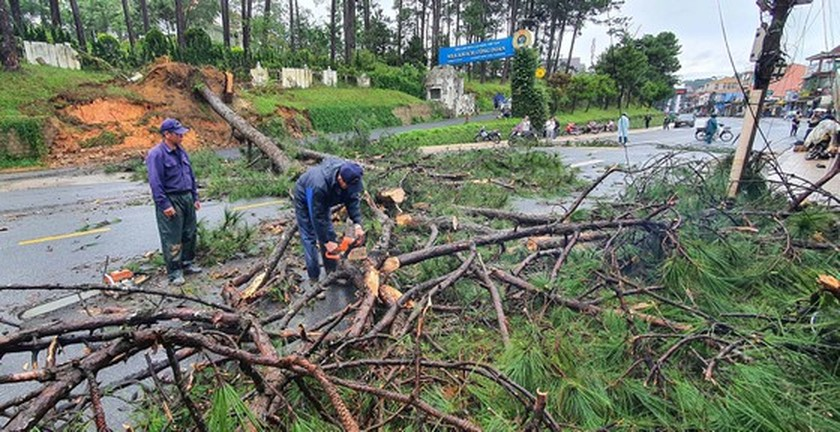 Downpour causes uprooted trees, mountain pass landslide in Da Lat City ảnh 2