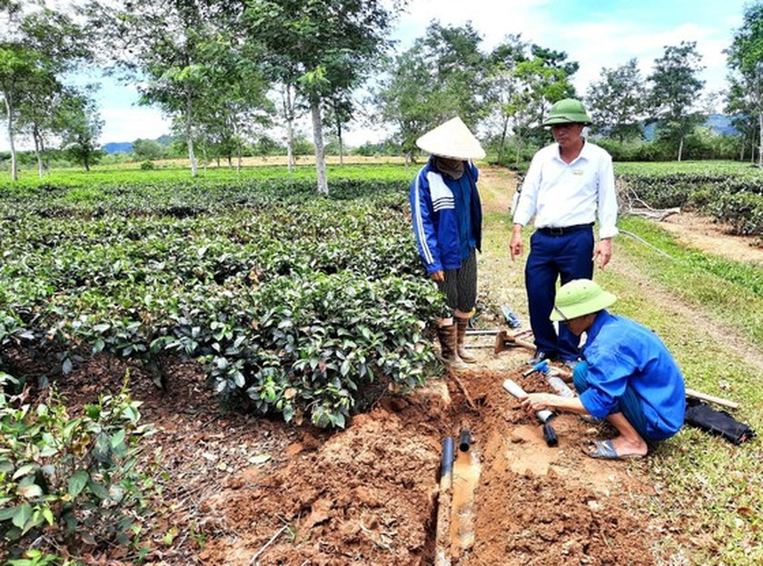 Hot climate, drought cause severe damage in Ha Tinh  ảnh 7