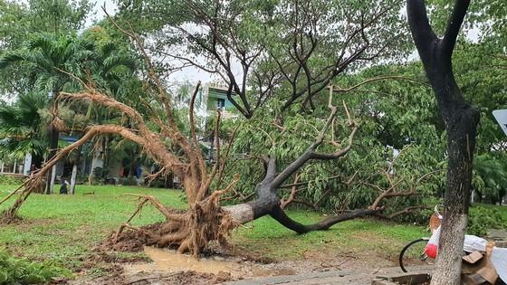 Downpour, storm-force wind rush down Central provinces  ảnh 11