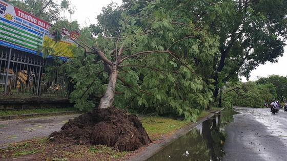 Downpour, storm-force wind rush down Central provinces  ảnh 3