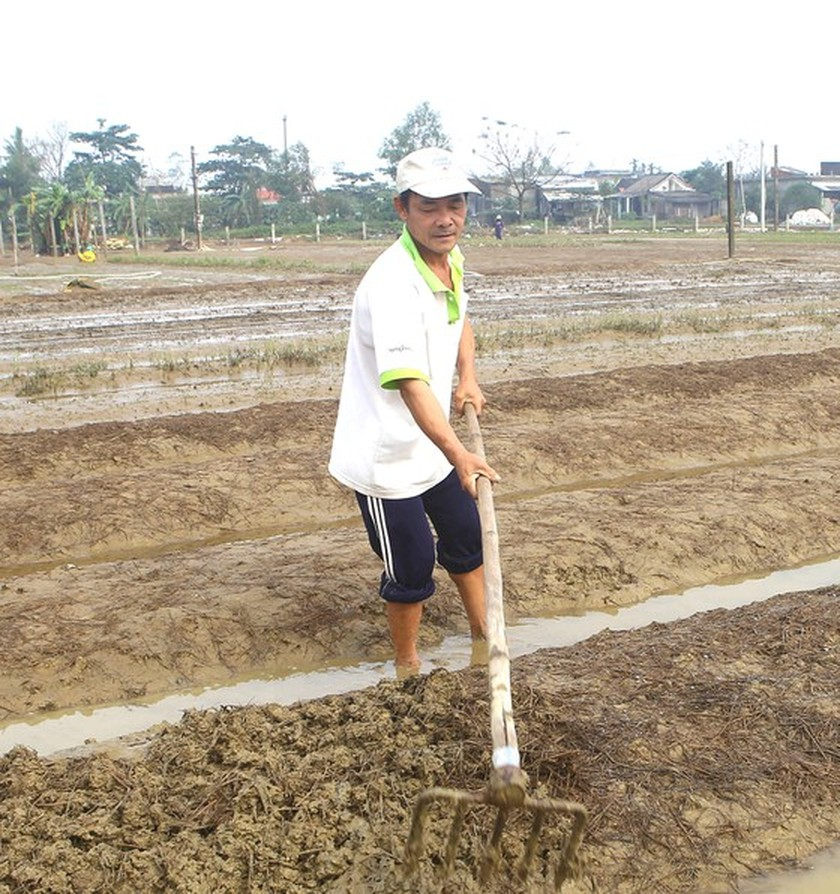 Residents in Central region begin to recover post-flood production activities  ảnh 2
