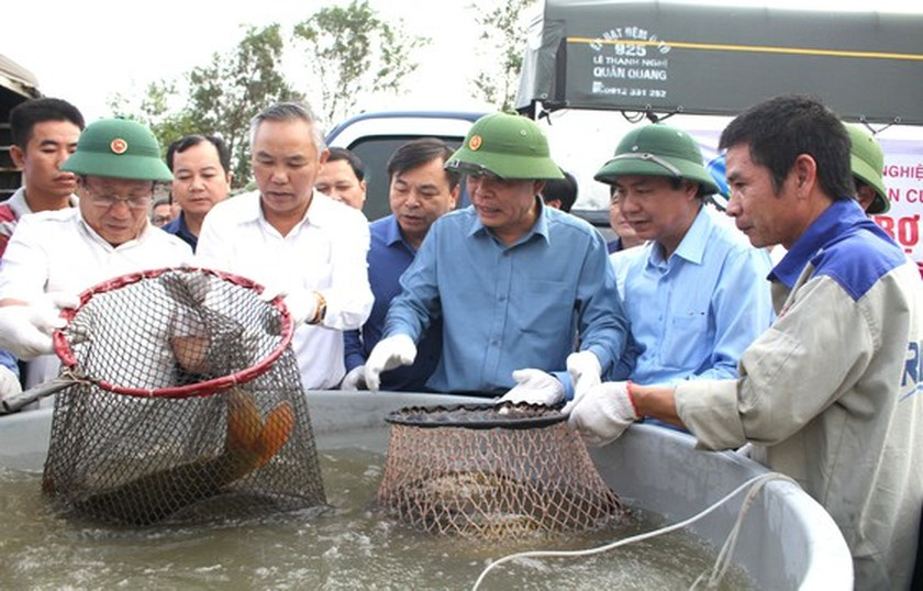 Residents in Central region begin to recover post-flood production activities  ảnh 6