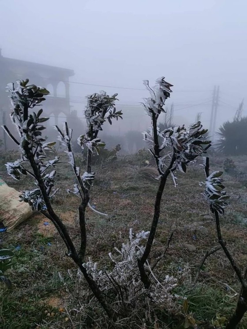 Mau Son mountain peak covered with snow, ice  ảnh 4