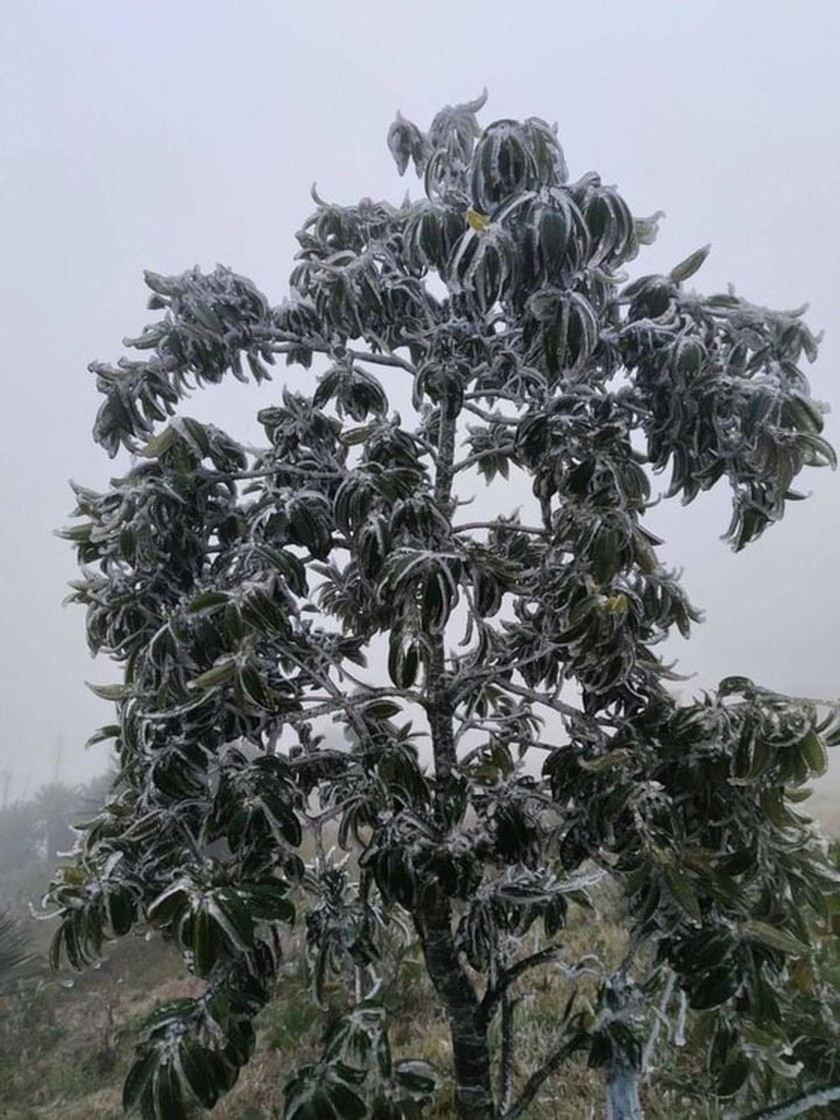 Mau Son mountain peak covered with snow, ice  ảnh 6