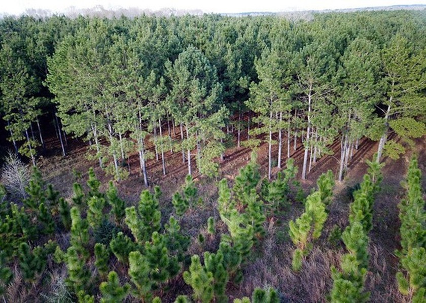 Vietnam plants an additional 31,497 hectares of forest in first three months ảnh 1