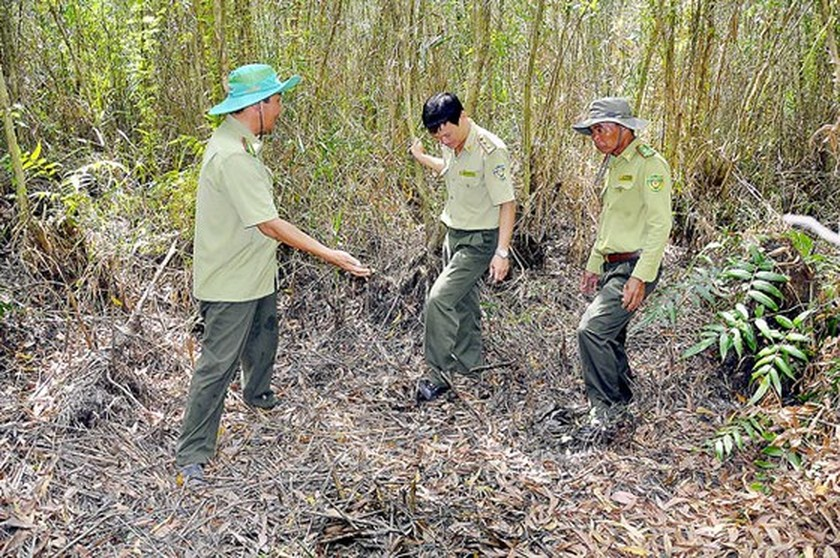 Mekong Delta provinces face high risk of forest fire in peak dry season ảnh 1