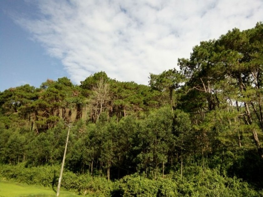 New Zealand donates VND800 mln for protecting, planting forest in Ninh Thuan  ảnh 1