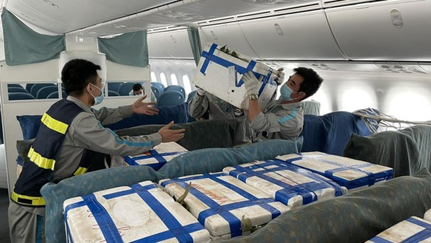 Nearly 100 tons of Bac Giang lychee delivered to HCMC via air-route  ảnh 1