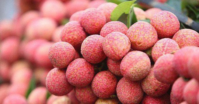 MoT proposes reduction of airfreight rates for Bac Giang lychees ảnh 1