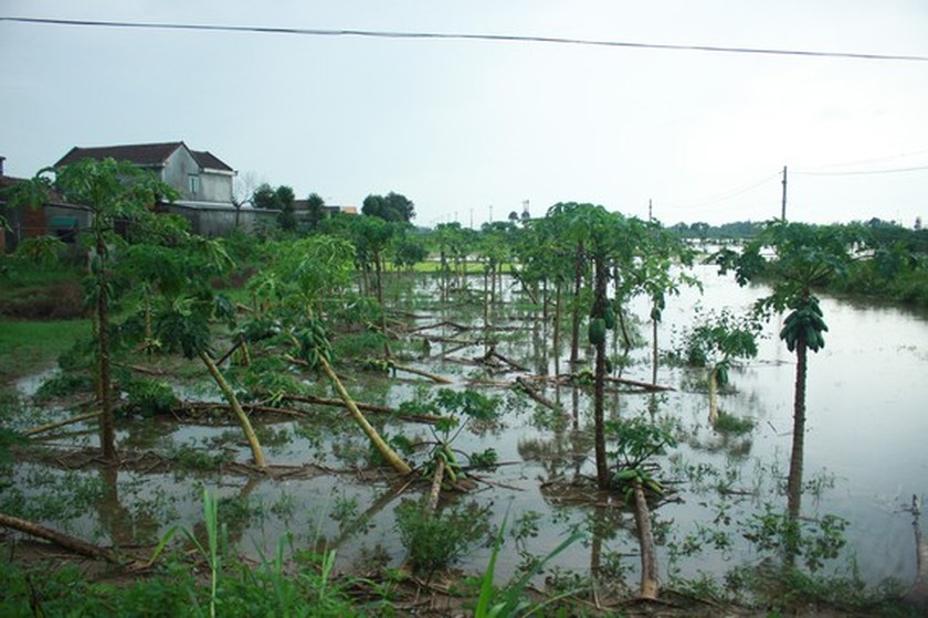 Central localities strengthen flood prevention operations ảnh 5