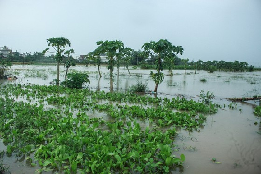 Central localities strengthen flood prevention operations ảnh 8