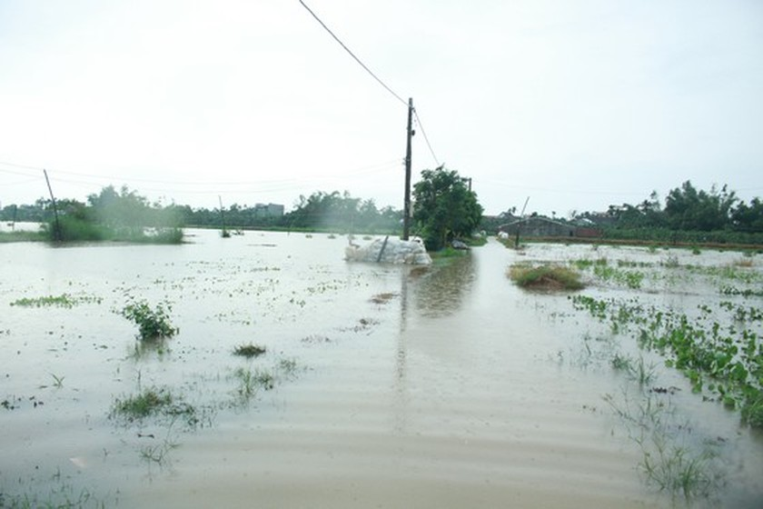 Central localities strengthen flood prevention operations ảnh 7