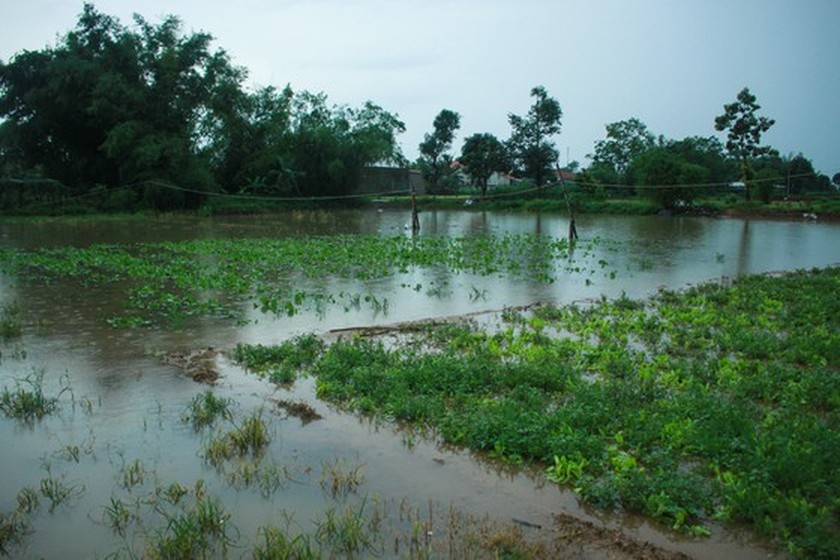 Central localities strengthen flood prevention operations ảnh 6
