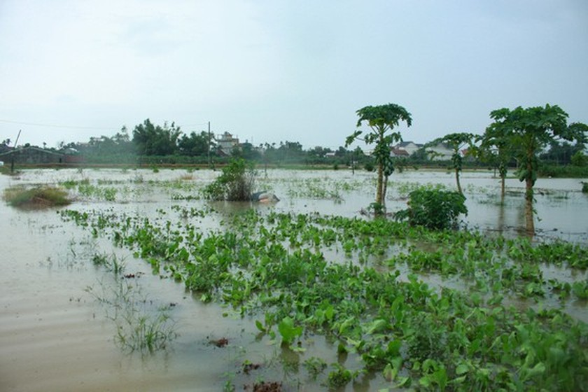 Central localities strengthen flood prevention operations ảnh 9
