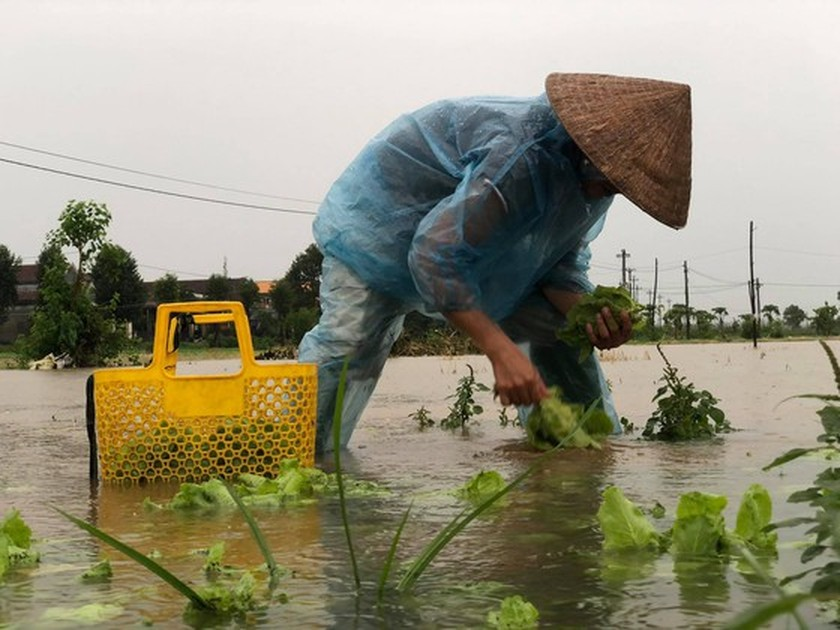 Central localities strengthen flood prevention operations ảnh 12