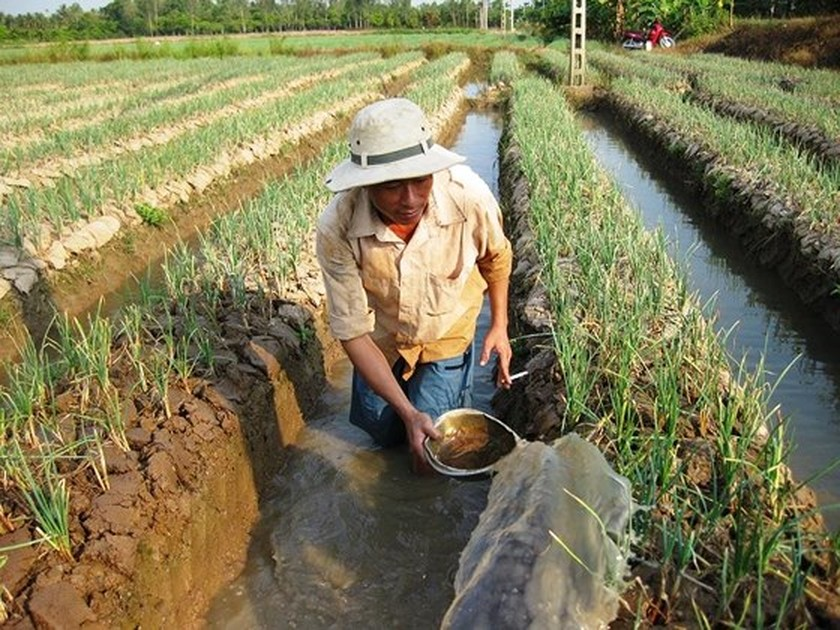 Southern provinces replace crops on ineffective rice growing area ảnh 2