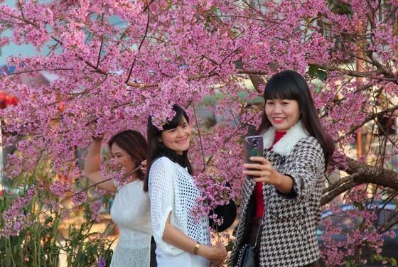 Wild himalayan cherry lures visitors to Da Lat city ảnh 12