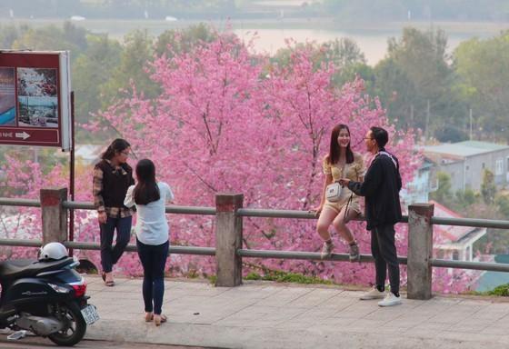 Wild himalayan cherry lures visitors to Da Lat city ảnh 15
