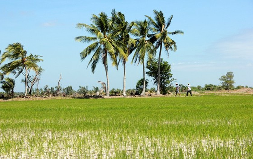 Mekong Delta copes with drought, salt intrusion during Tet holiday ảnh 7