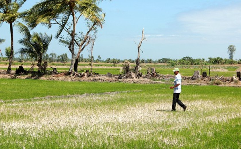 Mekong Delta copes with drought, salt intrusion during Tet holiday ảnh 6