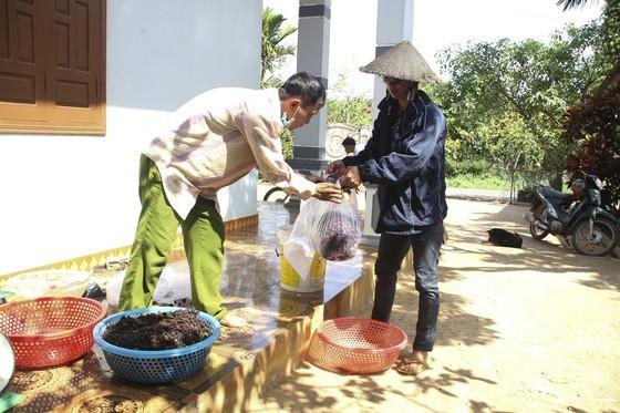 Quang Tri enjoys bumper black berry crop, good price ảnh 7