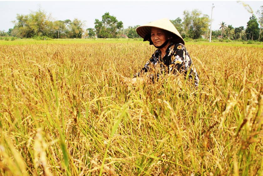Farmers struggle with drought, water shortage in Central region  ảnh 3