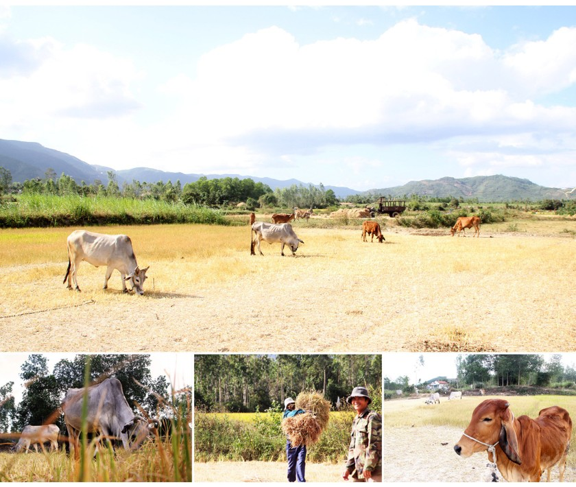 Farmers struggle with drought, water shortage in Central region  ảnh 1