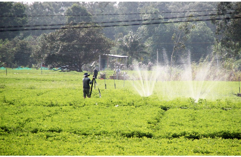 Farmers struggle with drought, water shortage in Central region  ảnh 14