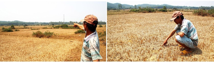 Farmers struggle with drought, water shortage in Central region  ảnh 5
