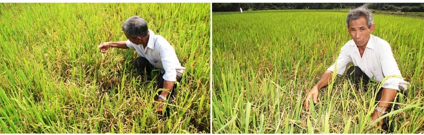 Farmers struggle with drought, water shortage in Central region  ảnh 6