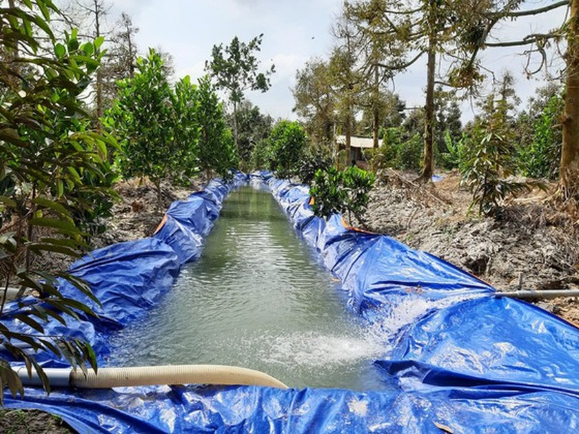 Mekong Delta sees downtrend of salt intrusion in May ảnh 1