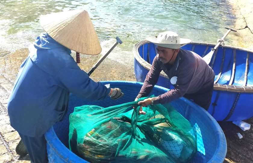 Lobster catchers earn big money in Central Vietnam ảnh 10