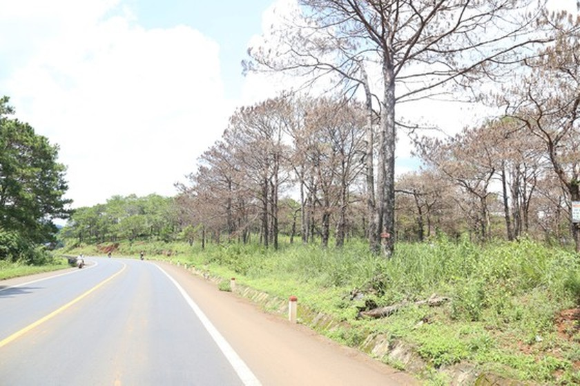 Forests cut down for agricultural purpose in Central Highlands, Central region ảnh 2