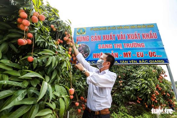 Một ngày, khách Nhật mua gần 20 tấn vải thiều Bắc Giang, giá 340.000 đồng/kg ảnh 1