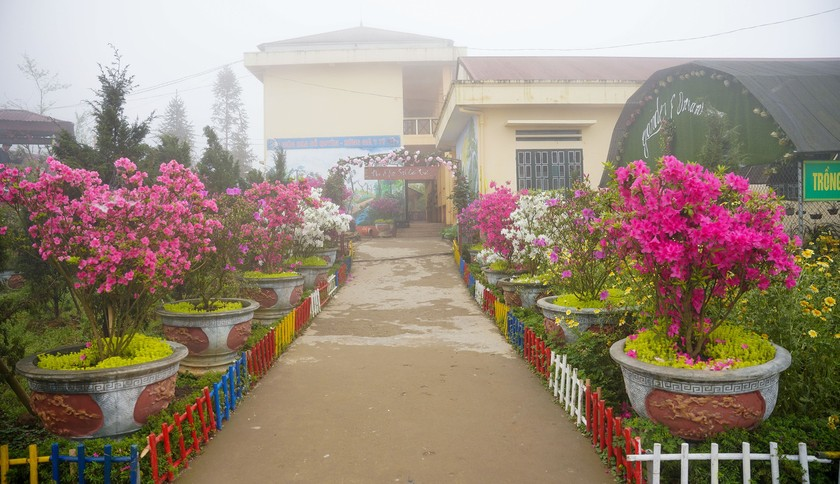 """Rhododendron school"" a tourism hit in Lao Cai ảnh 8"