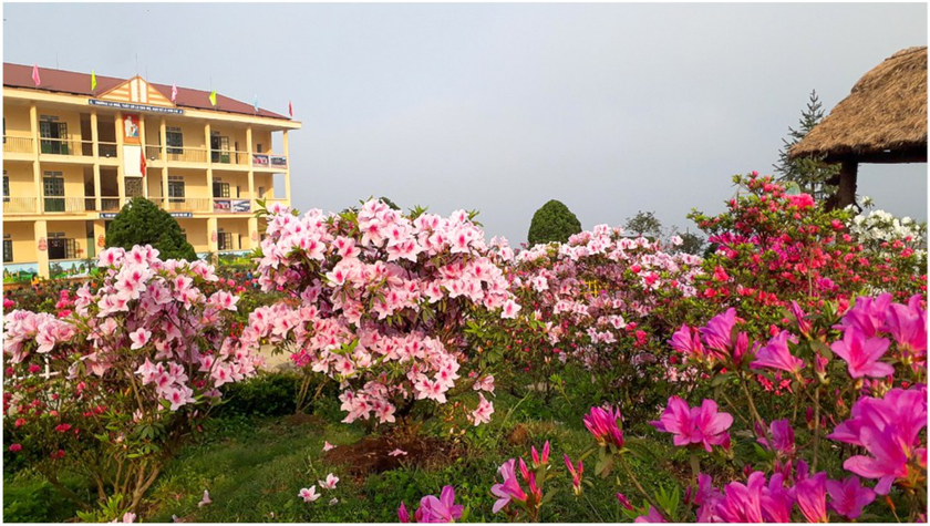 """Rhododendron school"" a tourism hit in Lao Cai ảnh 1"