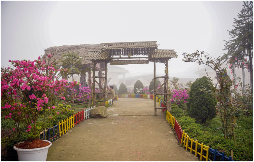 """Rhododendron school"" a tourism hit in Lao Cai ảnh 5"