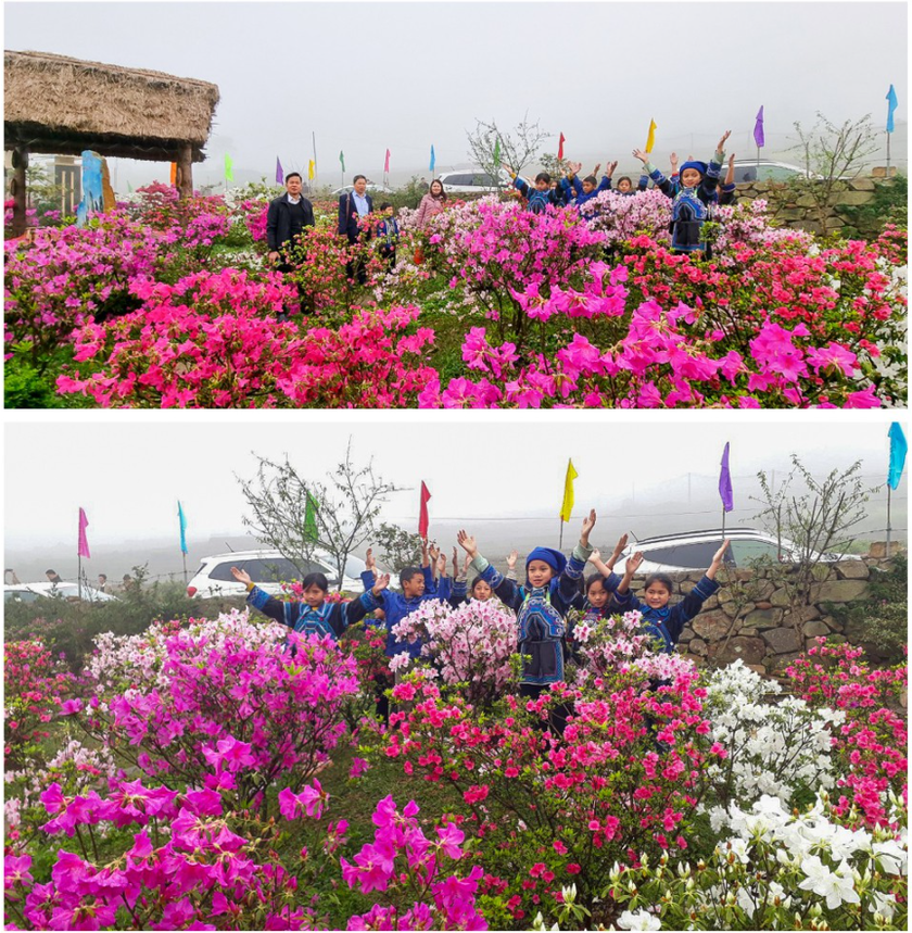 """Rhododendron school"" a tourism hit in Lao Cai ảnh 7"