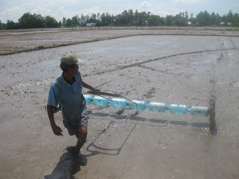 Winter-spring rice farming areas expected to reduce to avoid saltwater intrusion ảnh 1