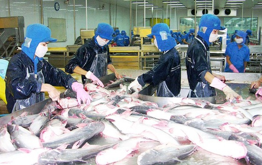 Increasing quality of seafood products for better competitiveness ảnh 1