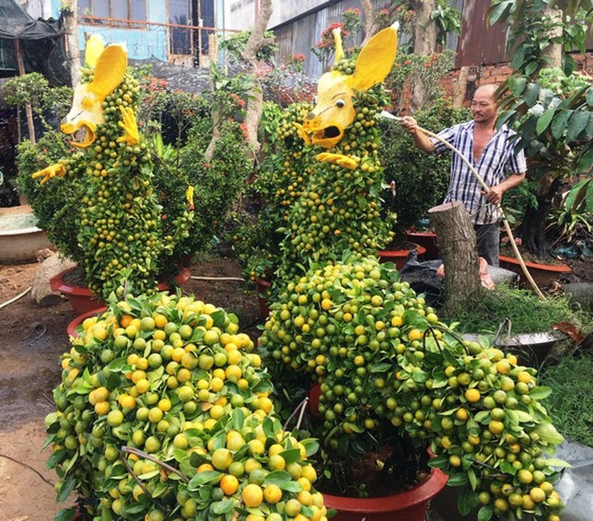 Mekong Delta farmers sell out about 80 percent of flower production for Tet holidays ảnh 1