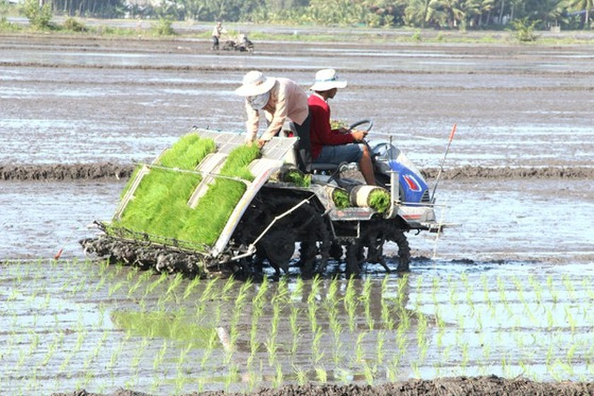 Rice cultivation no longer toiling, moiling ảnh 1