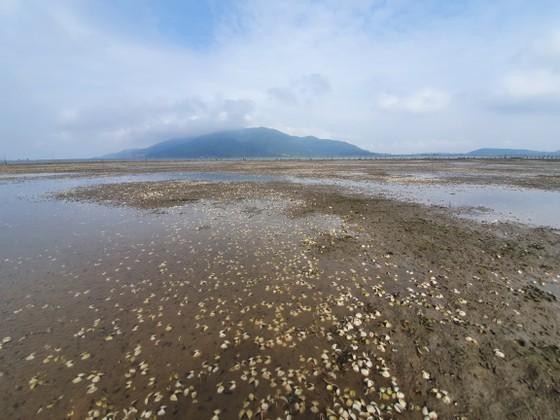 Mass shellfish kill causes farmers to suffer huge losses ảnh 1