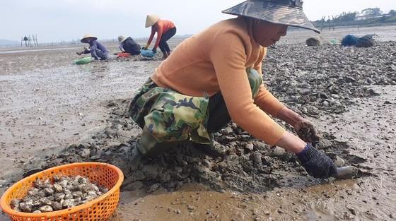 Mass shellfish kill causes farmers to suffer huge losses ảnh 2