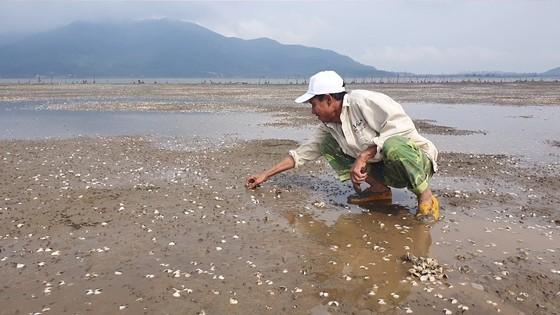 Mass shellfish kill causes farmers to suffer huge losses ảnh 3