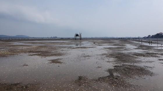Mass shellfish kill causes farmers to suffer huge losses ảnh 5