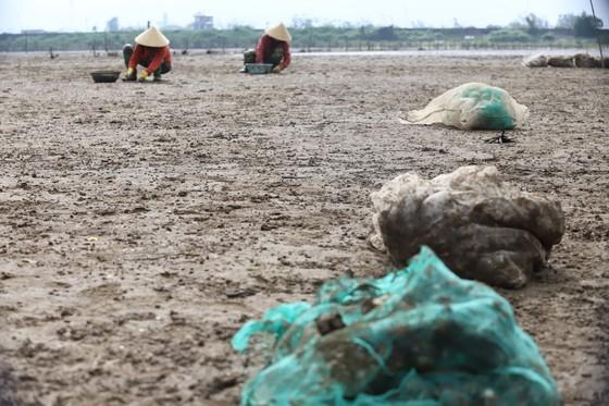 Mass shellfish kill causes farmers to suffer huge losses ảnh 8