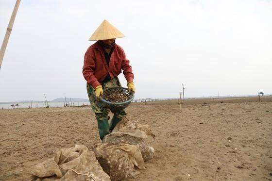 Mass shellfish kill causes farmers to suffer huge losses ảnh 10
