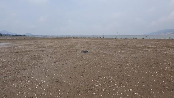 Mass shellfish kill causes farmers to suffer huge losses ảnh 11